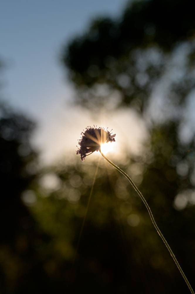 Photo en couleur d'une herbe au coucher de soleil prise par la photographe Florence Martin